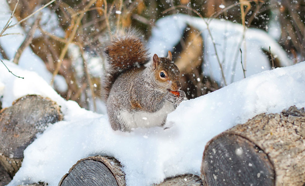 animals_winter
